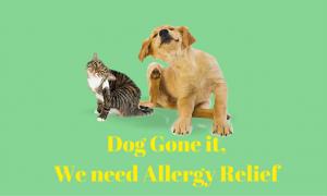 We need Allergy Relief
